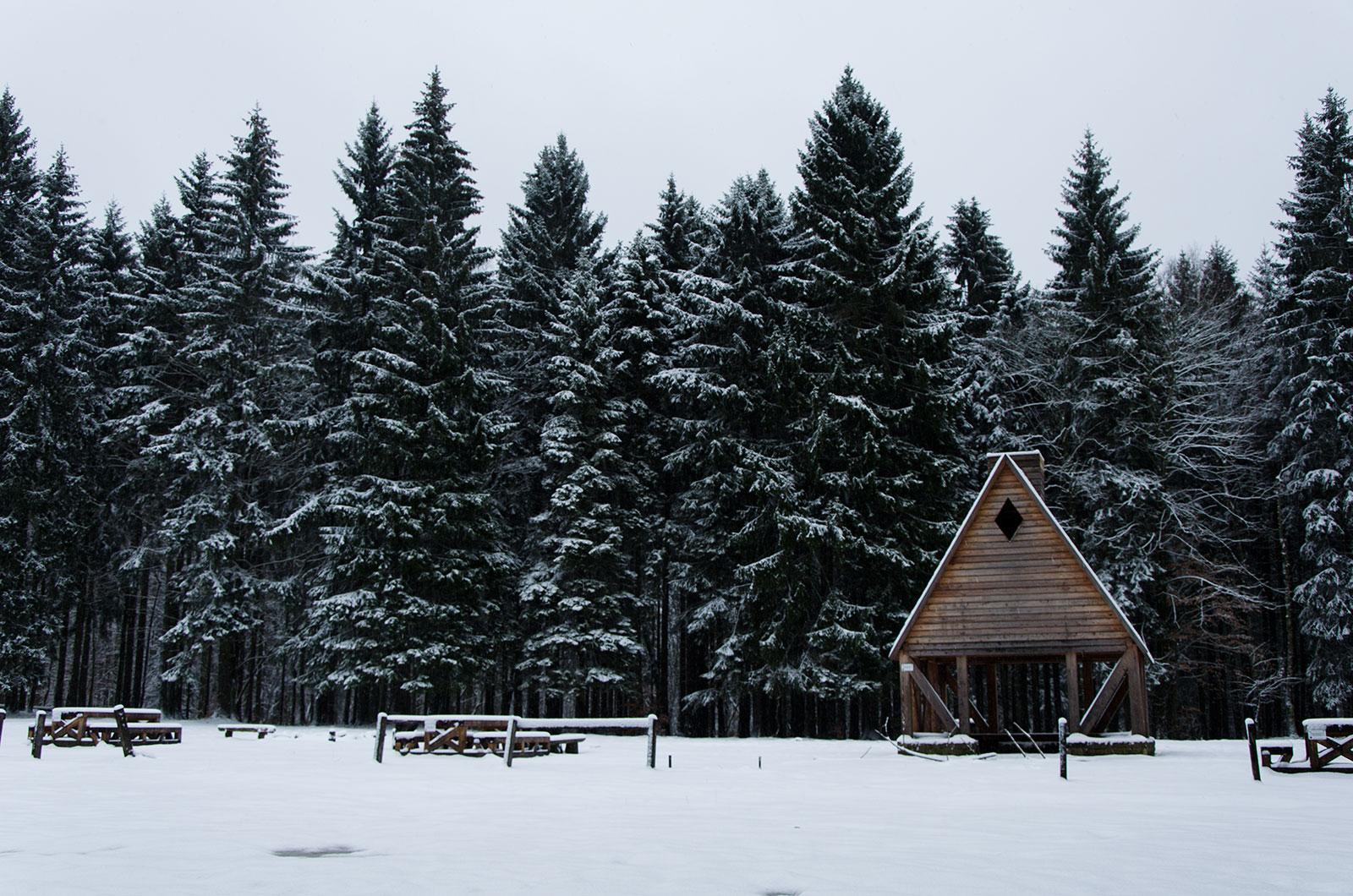Roadtrip Pologne, forêt enneigée