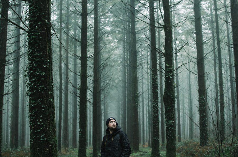 Brume en forêt
