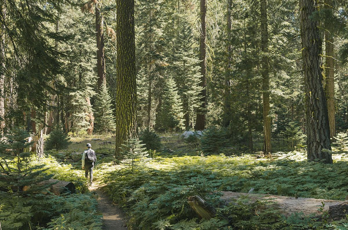trail sequoia nation park
