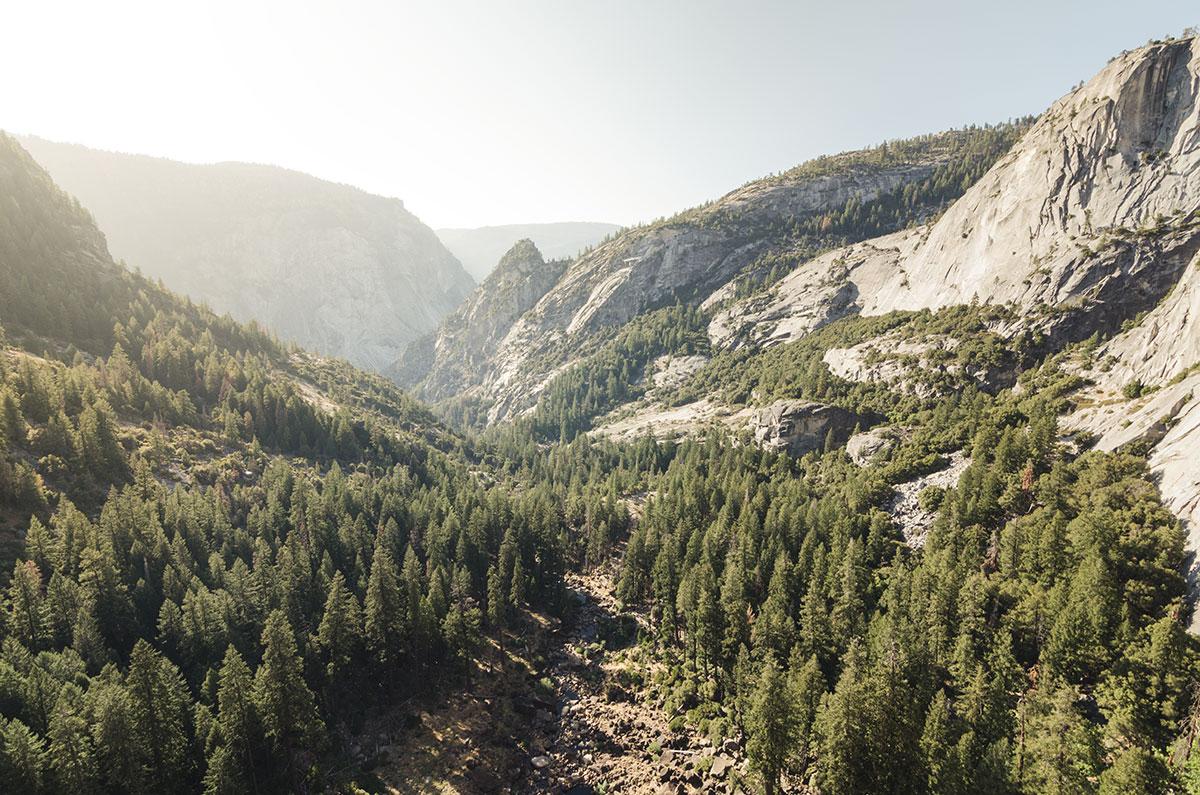 Yosemite forêt