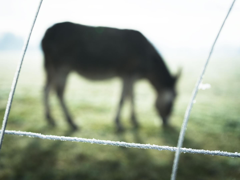 âne en bretagne