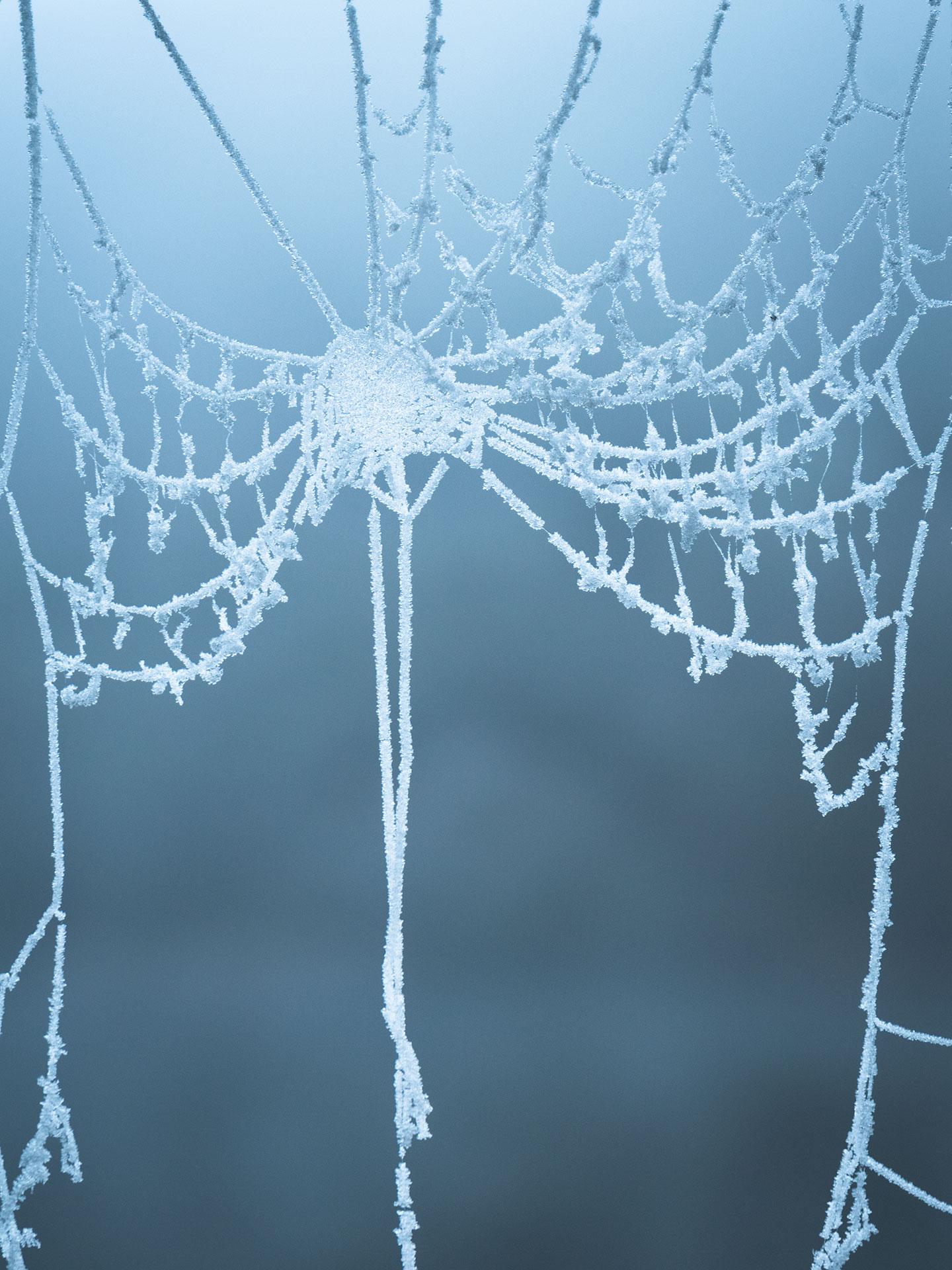 toile d'araignée glacée