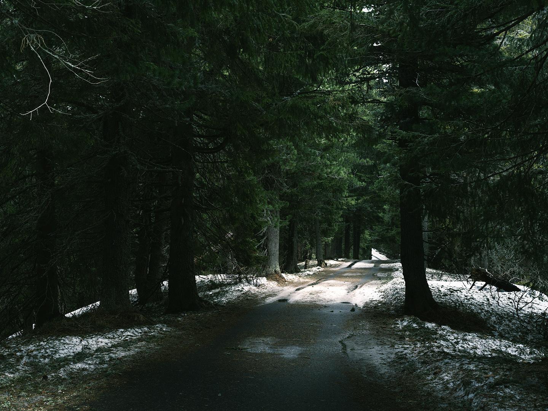 forêt en slovaquie