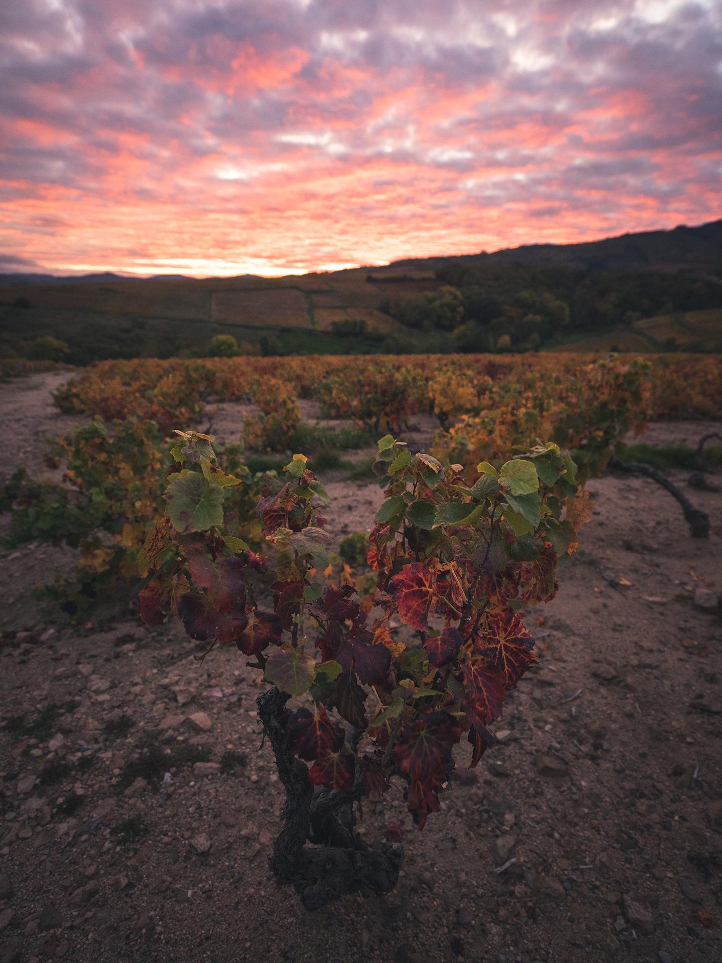 coucher de soleil beaujolais