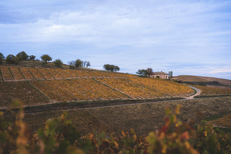 visite vignoble beaujolais
